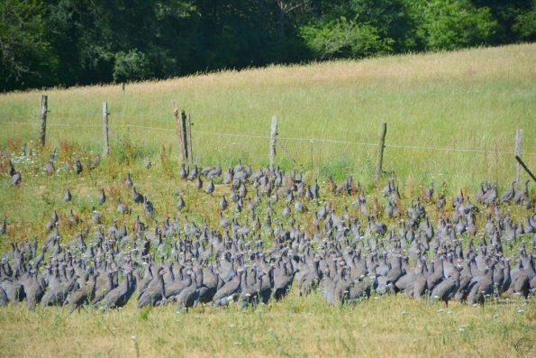 volailles Fermières d'Auvergne